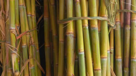 sweetener : Bunch of sugar cane stalks. Sugar cane juice