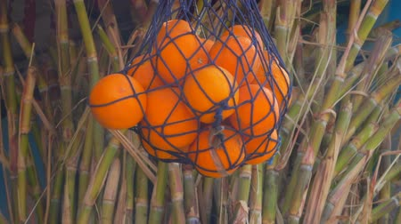 sweetener : Bundle of sugar cane stems and a net with oranges
