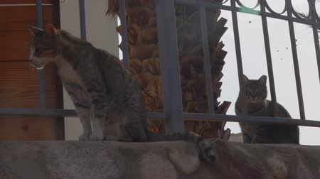 ter cuidado : Homeless Cats walking behind the fence on the Street in the Summer. Stock Footage