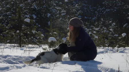 game hunting : Mistress plays with a black and white spaniel in a winter park