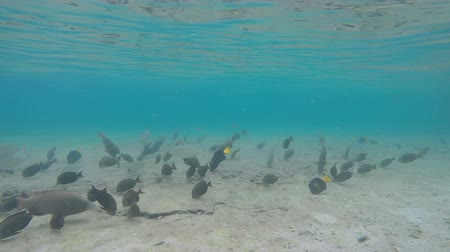 anemon : Many species of tropical fish swim under water near the coral reef Stok Video