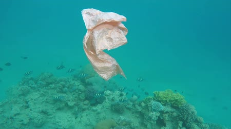 paraíso : Trash plastic bag floats over coral reefs in the red sea, pollution Vídeos