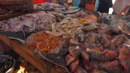 midye : Fresh catch of lobsters in the fish market Stok Video