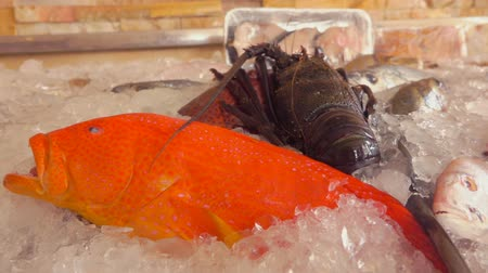 kalmar : Showcase of a fish restaurant with various types of fish and crustaceans Dostupné videozáznamy