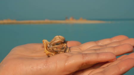 shy : Crab hermit climbs out of the sink on the palm of your hand Stock Footage