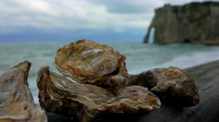 shellfish dishes : Fresh oysters on the Atlantic coast on a wooden surface against the background of ocean waves on the quay Etretat, Normandy Stock Footage