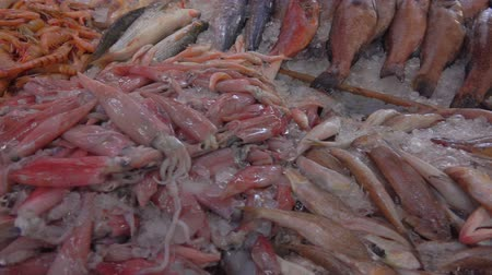 скумбрия : Squid and various varieties of fish in the showcase of the fish market