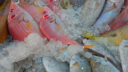 makrela : Different kinds of fish lie in the showcase of the fish market Dostupné videozáznamy