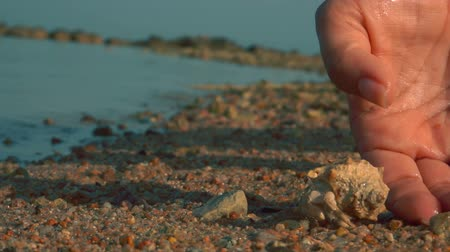 hermit crab : A hermit crab runs from the palm to the sand