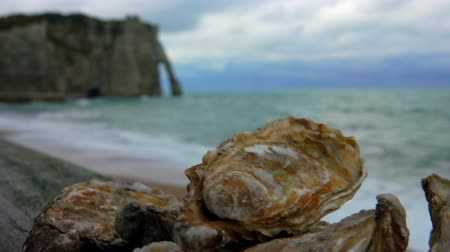 měkkýš : Fresh oysters on the Atlantic coast on a wooden surface against the background of ocean waves on the quay Etretat, Normandy Dostupné videozáznamy