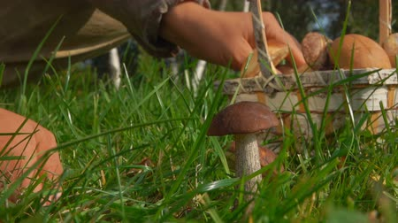 грибок : Picking mushrooms in the Forest Glade with a beautiful basket Стоковые видеозаписи