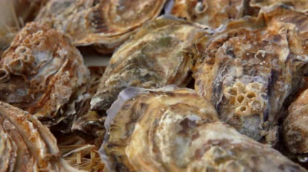 oysters : Panoramic camera movement on a box with fresh closed oysters. Stock Footage