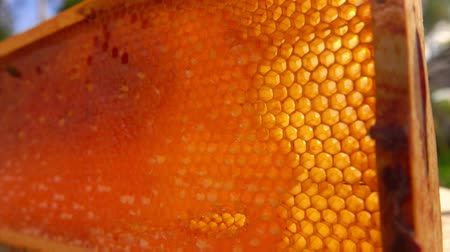 mead : Wooden frame of honeycombs lies on a wooden table on a sunny summer day in the fresh air.