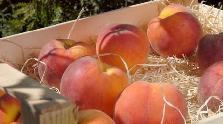 pesche noci : Female hand puts ripe juicy peach in a wooden box