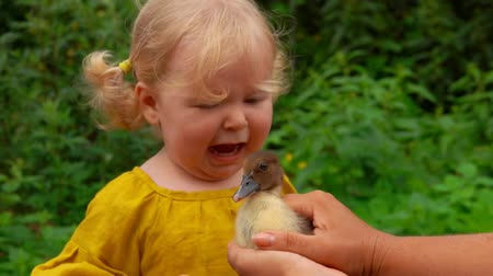baby chicken : A little girl stroking a duckling in her mother s arms and gets scared when he turns Stock Footage