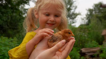 csaj : Little girl stroked the little chicken in the arms of her mother.