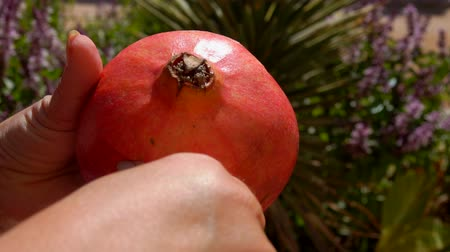 гранат : Hands cut a ripe juicy pomegranate with a knife.