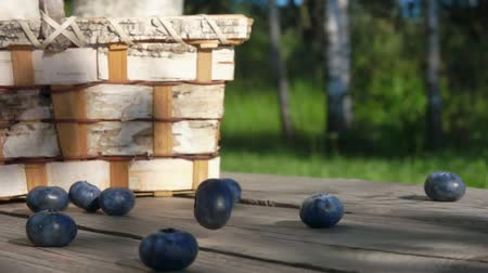 havlama : Slow motion one berrie Blueberrie fall on a wooden table next to a basket of birch bark Stok Video
