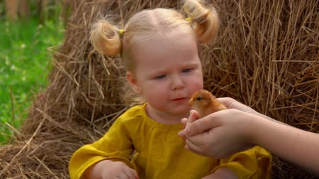 baby chicken : Charming blond farm girl gently stroking a little chick on the head