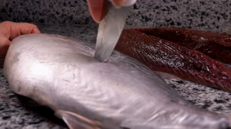 dorsal : Cook cuts along the dorsal fin of large tuna on a gray marble table