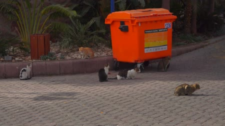 leftover : Homeless street cats are sitting next to trash container