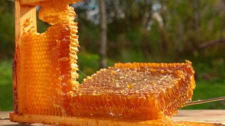 sealed : Beekeeper takes honey in a honeycomb with a metal kitchen spatula. Frame of honeycombs lies on a wooden table on a sunny summer day in the fresh air