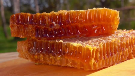 sealed : Honey comb lies on a wooden table against the background of birches on a sunny summer day.