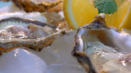 molusco : Open oysters on a white plate with ice and lemon. Very close up