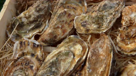 istiridye : Panoramic camera movement on a box with fresh closed oysters. Stok Video