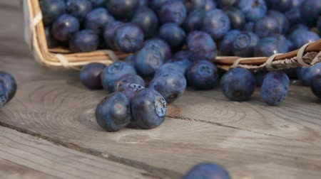 çiğ gıda : Extreme close up of blueberries fall out of the basket on a wooden table and roll towards the camera