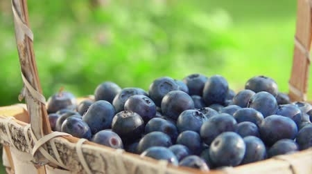 antioksidan : One berry falls in a basket with beautiful large blueberries in slow motion on a background of green lawn Stok Video
