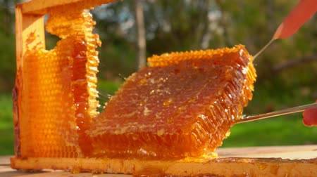 sealed : Part of the honeycombs cut out of the frame on a sunny summer day in a green meadow Stock Footage