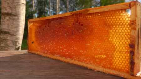 sealed : Panorama of the frame with honeycombs standing on a wooden surface on a sunny summer day in the fresh air. A bee is crawling on its honeycombs.