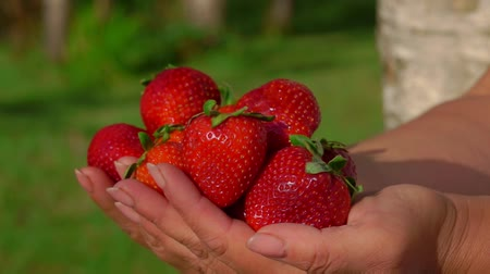 восхитительный : Delicious large fresh red strawberries in hands on baclkground of a green lawn Стоковые видеозаписи