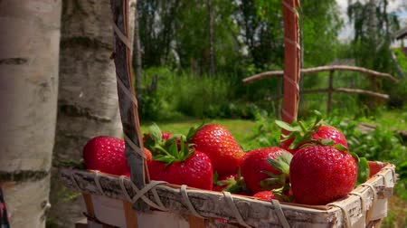 bűbájos : Sweet strawberry falling in a wicker basket on a bright sunny day