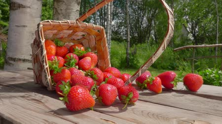 proutěný : Sweet red juicy strawberries fall out of the wicker basket on a wooden table and roll towards the camera on a bright sunny day Dostupné videozáznamy