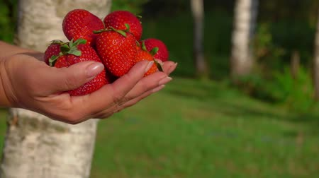 восхитительный : Hands pass forward a pile of large beautiful appetizing strawberries