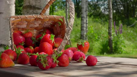 proutěný : Extreme close up of strawberries fall out of the wicker basket on a wooden table and roll towards the camera