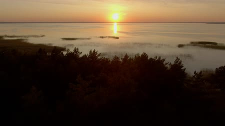 водохранилище : Aerial camera flies over a pine forest on the lake towards sunset