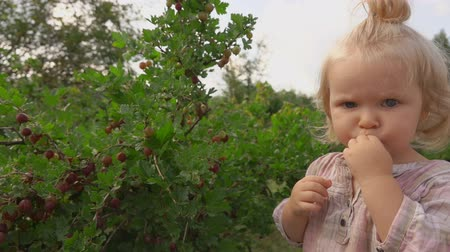 фрукты : Little cute blond girl tastes gooseberries from the bush