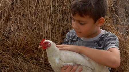 saçlı : Farmer dark-haired boy is sitting on a haystack and stroking a chicken Stok Video