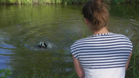 jachthonden : Woman watches her black and white English cocker spaniel swimming in a pond