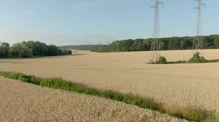 Aerial shot of a wheat field with high voltage line and forest in the background Wideo