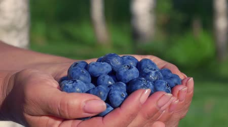 Large beautiful blueberries in palms on a background of green lawn