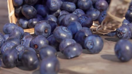 Slow motion of blueberries fall out of the basket on a wooden table and roll towards the camera