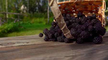 Basket with ripe blackberry falls on a wooden table. Berries fall on the table. Slow motion outdoors against birch