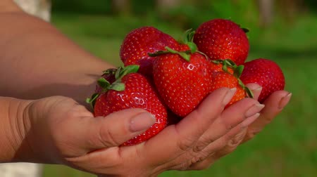 frutoso : Delicious large fresh red strawberries in hands on baclkground of a green lawn Vídeos
