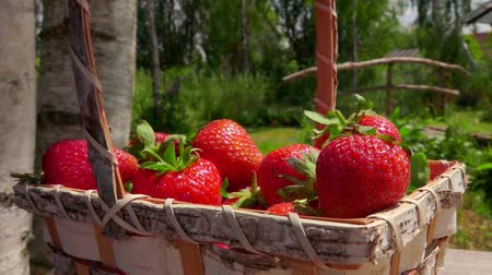 Sweet strawberry falling in a wicker basket on a bright sunny day