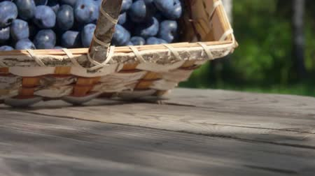 antioxidant : Basket full of large blueberries fall on a wooden table and berries roll towards the camera in slow motion