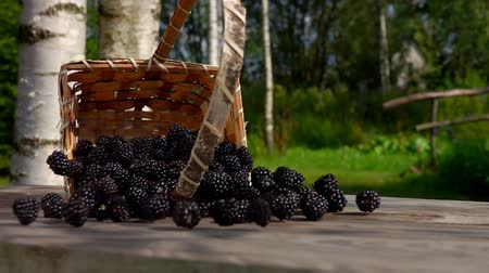 blackberry : Blackberries get enough sleep on a wooden table from a wicker basket. Berries fall on the table. Slow motion outdoors against birch